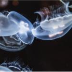 【第1回 深海生物検定】感想編・勉強編